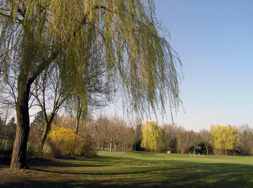 Der Park des ehemaligen LKH Göttingen