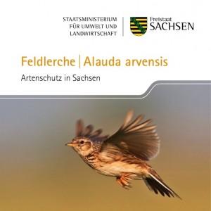 Titel der Broschüre des Sächsischen Staatsministeriums für Umwelt und Landwirtschaft über die Feldlerche