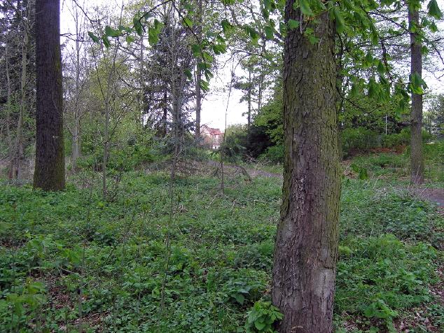 Ehemaliges LKH Göttingen, eine Grüne Lunge