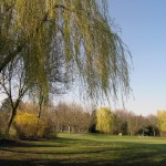 Park des ehemaligen LKH Göttingen, Fußballwiese