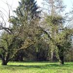 Asklepios Göttingen, Park