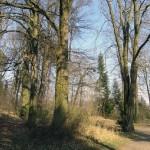 Park ehemaliges LKH Göttingen, Waldchen